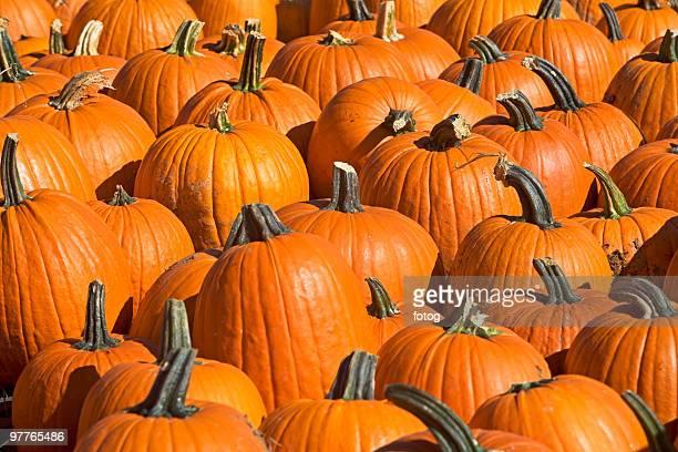 pumpkins - pumpkin patch stock photos and pictures