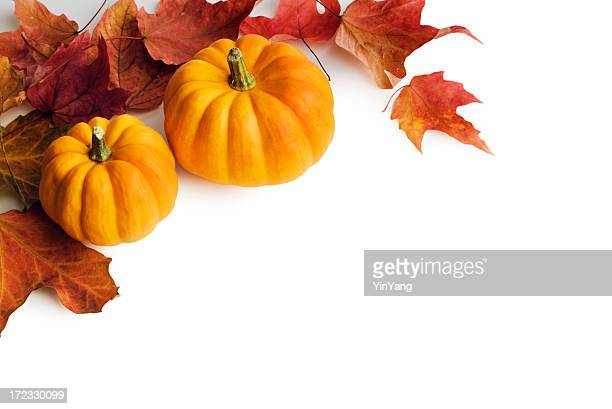 Pumpkins, Red Autumn Maple Leaves Frame Border on White Background