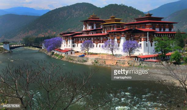 punakha dzong, bhutan - bhutan stock pictures, royalty-free photos & images
