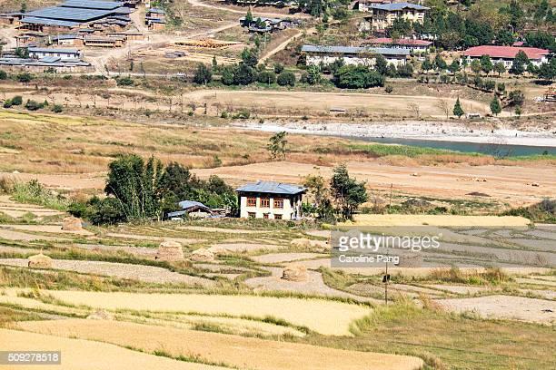 punakha valley, bhutan - caroline pang stock pictures, royalty-free photos & images