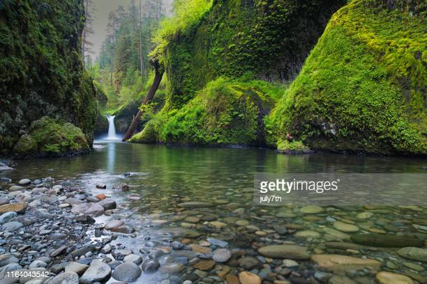 punch bowl falls and greenery on eagle creek - spring nature stock pictures, royalty-free photos & images