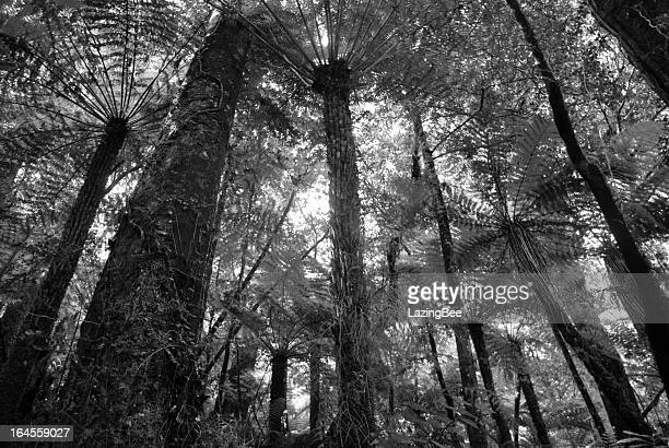 Punga Canopy, New Zealand