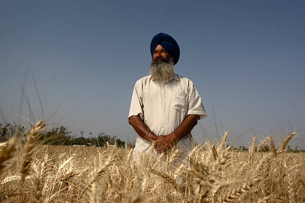 Punjab`s first organic farmer Inderjeet Singh stands for a photograph in his organic wheat field in the village of Sahauli on the outskirts of Nabha..