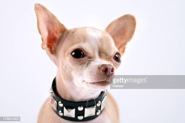 punk chien