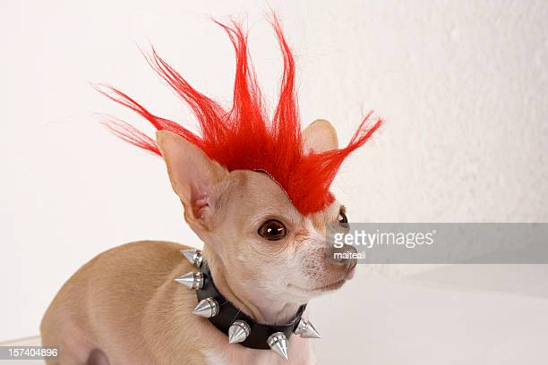 punk - dog cruelty stock pictures, royalty-free photos & images