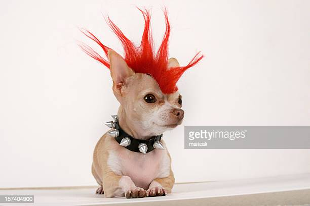 punk - individuality stock photos and pictures