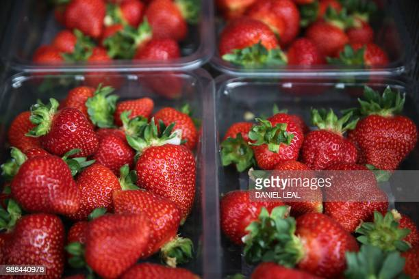 Punnets of strawberries are stacked at BR Brooks Son farm in Faversham south east England on June 29 2018 After weeks of uninterrupted sunshine the...