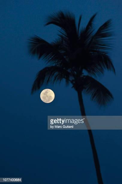 , punta cana, dominican republic - punta cana fotografías e imágenes de stock