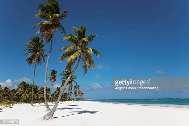 Punta Cana, Dominican Republic, West Indies, Caribbean, Central America