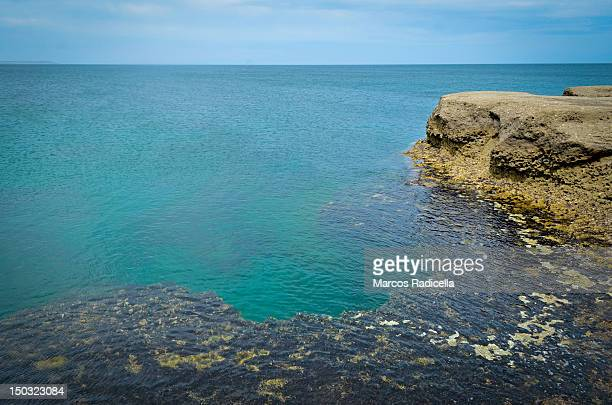 punta pardelas, peninsula valdes - radicella stock pictures, royalty-free photos & images