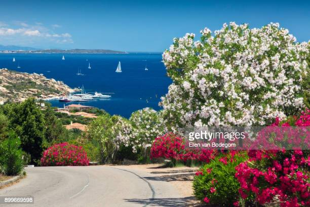 Punta Sardegna and view over the Mediterranean Sea in Palau, one of the main tourist towns at the Costa Smeralda