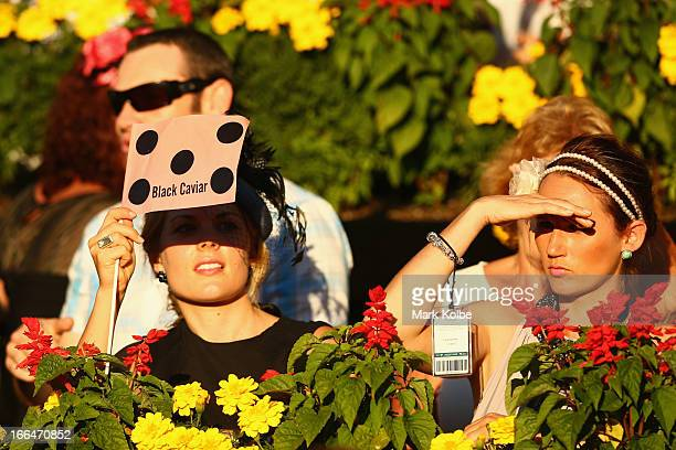 Punters watch on as 'Black Caviar' is walked around the mounting yard before race 9 the Darley TJ Smith Stakes poses in the mounting yard on...