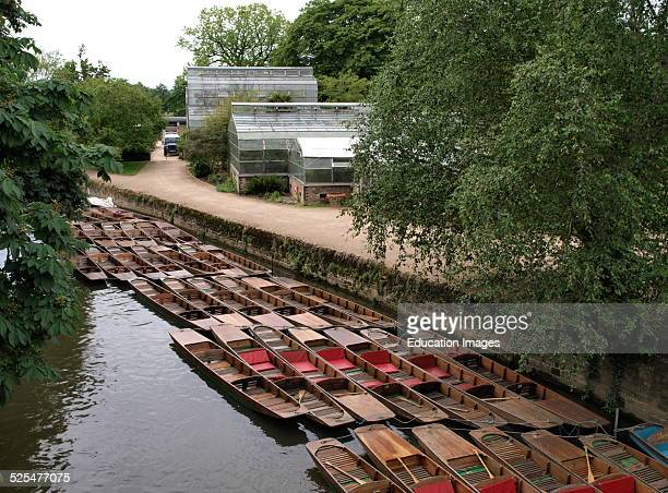 Punts moored on the River Thames next to the University of Oxford Botanic Garden Oxford UK