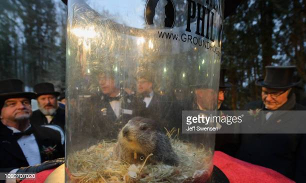 Punxsutawney Phil did not see his shadow predicting an early spring during the 133rd annual Groundhog Day festivities on February 2 2019 in...