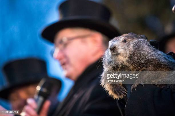 Punxsutawney Phil is held by the handler as the prediction for six more weeks of winter is read during Groundhog day ceremonies on February 2 2018 in...
