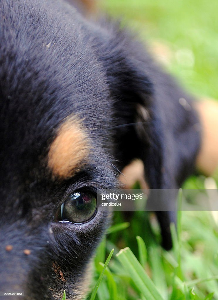 pup close up : Stock Photo