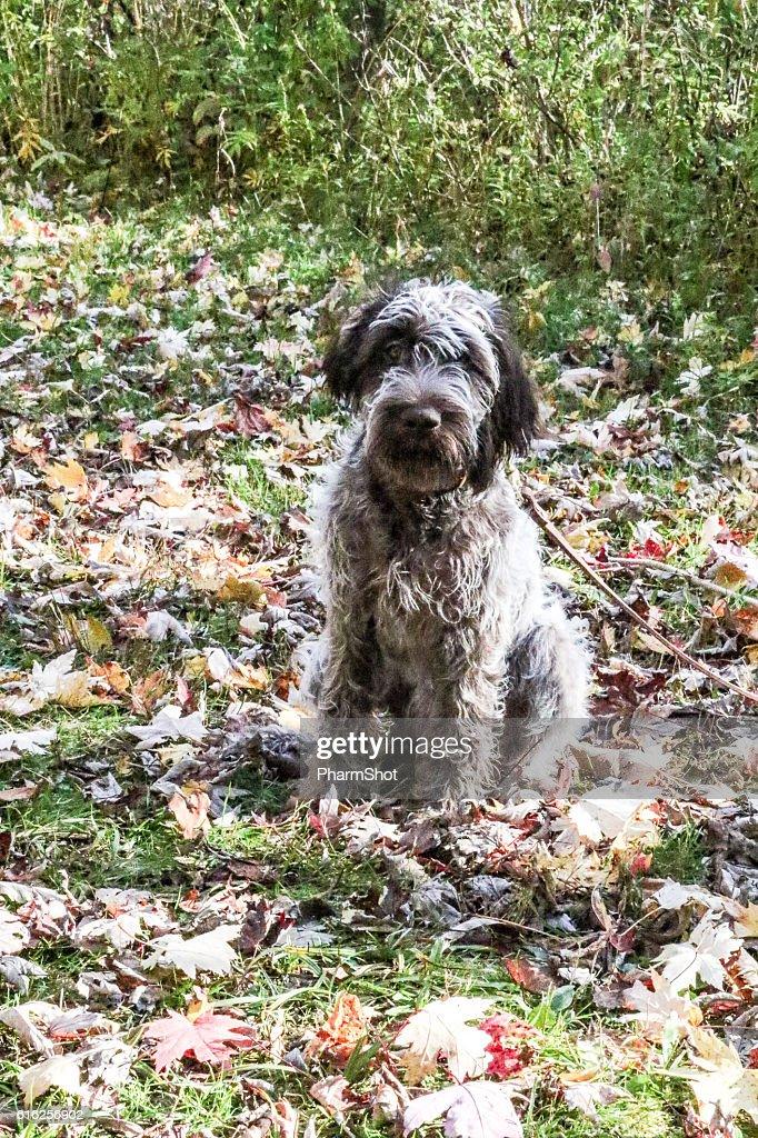 pup in leaves : Foto de stock