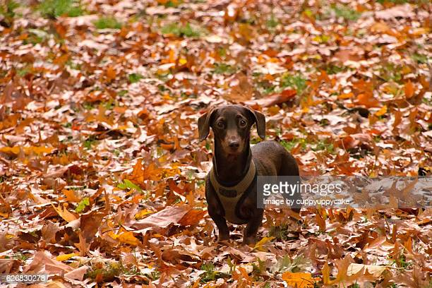 pup in the park - london breed stock pictures, royalty-free photos & images