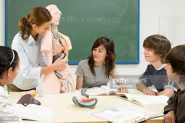 Pupils and teacher with anatomical model