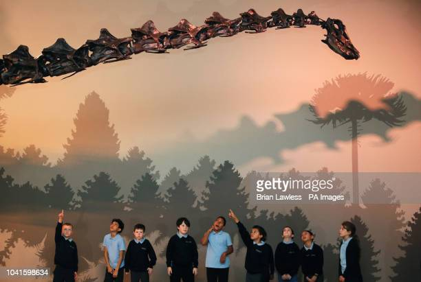 Pupils from Botanic Primary school view Dippy The Natural History Museum's Diplodocus skeleton cast during a media preview in the Ulster Museum...