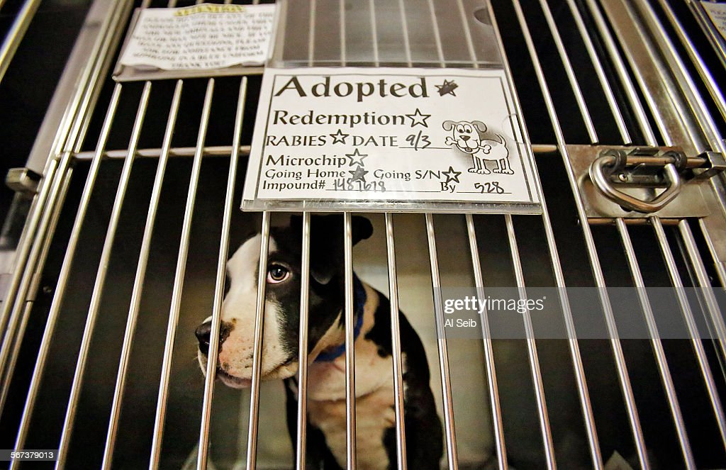 Los Angeles Ca September 03 2014 A Puppie Waits To Be Adopted