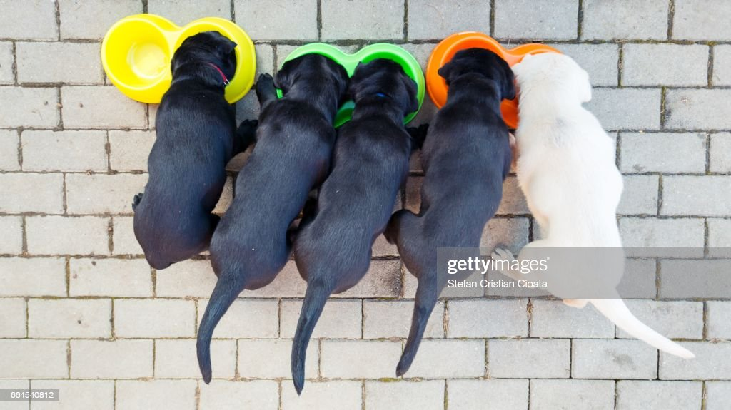 Puppies at lunch time : Stock Photo