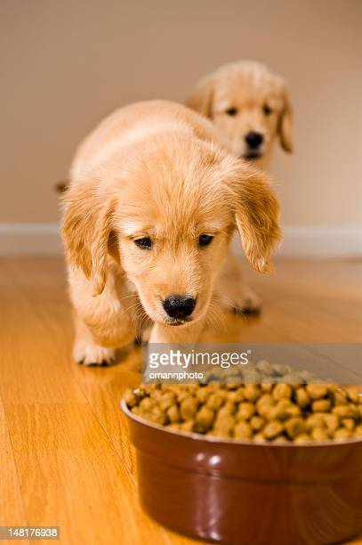 puppies dinner time - dog eating stock photos and pictures