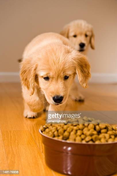 子犬夕食の時間