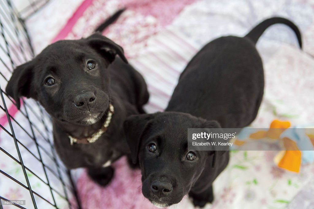 Puppies for adoption : Stock Photo