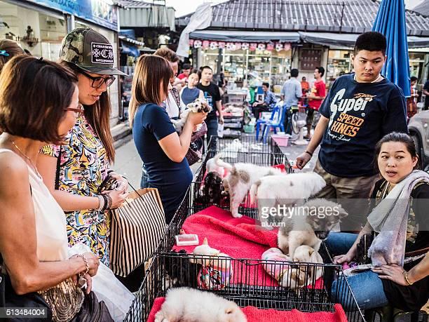 Chiots à la vente au marché de Chatuchak Bangkok, Thaïlande