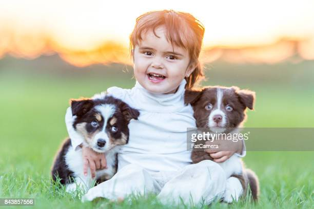 Cachorros en un campo