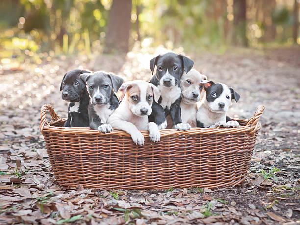 Puppies In Wooden Basket Wall Art