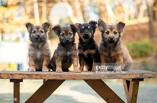 puppies on a bench. - young animal stock pictures, royalty-free photos & images