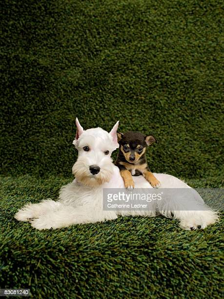Puppies on background