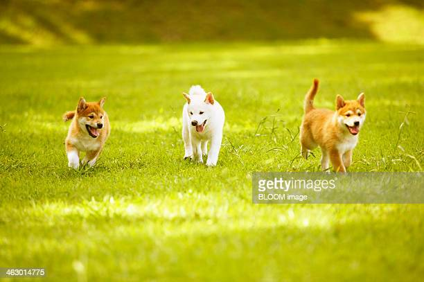Puppies Playing In The Park