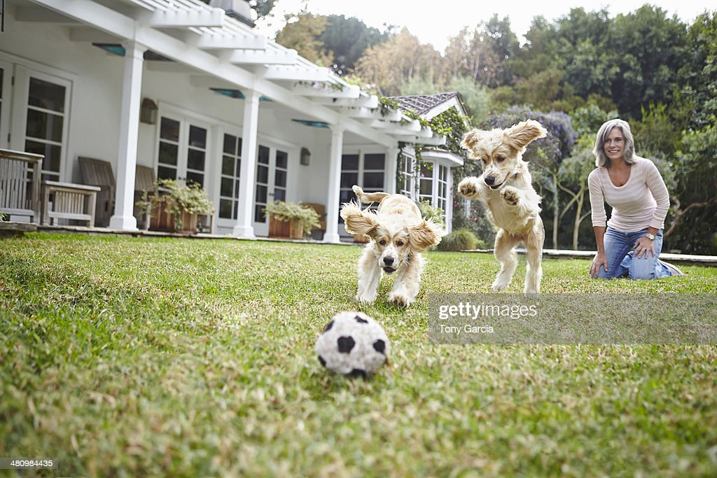 Puppies running after ball, woman in background : Stock Photo