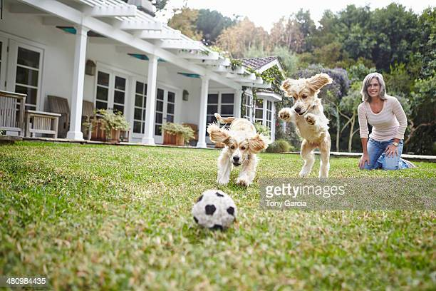 Puppies running after ball, woman in background