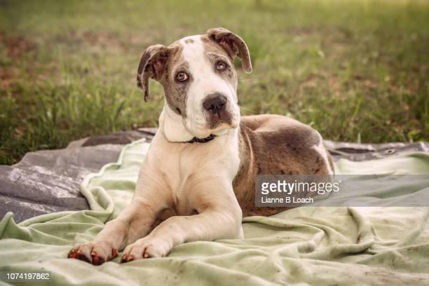 puppy 2 - lianne loach - fotografias e filmes do acervo