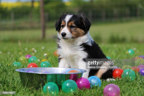puppy amidst easter eggs on grass - dog easter stock pictures, royalty-free photos & images