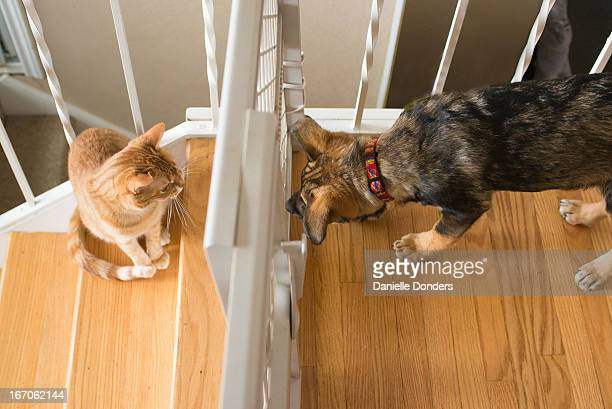 """puppy and cat look at each other through babygate - """"danielle donders"""" stock pictures, royalty-free photos & images"""