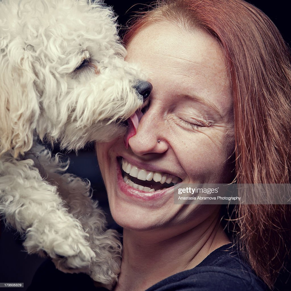 A cute white miniature French poodle puppy licking the face of his owner.