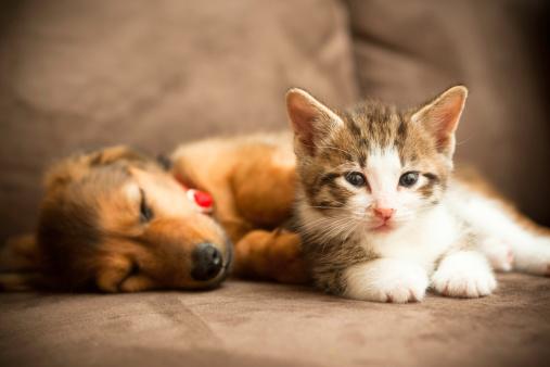 Puppy and Kitten 183334500