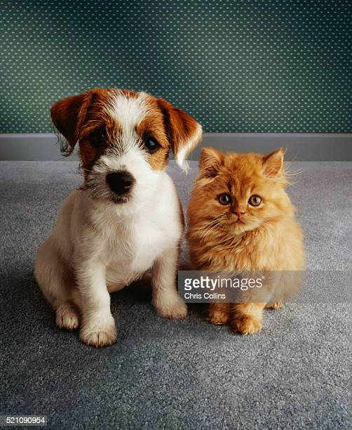 puppy and kitten - puppies stock pictures, royalty-free photos & images