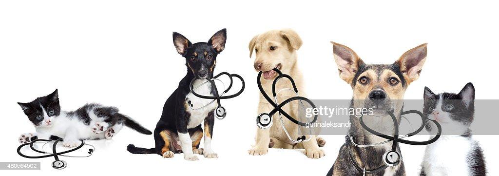 puppy and kitten vet : Stock Photo