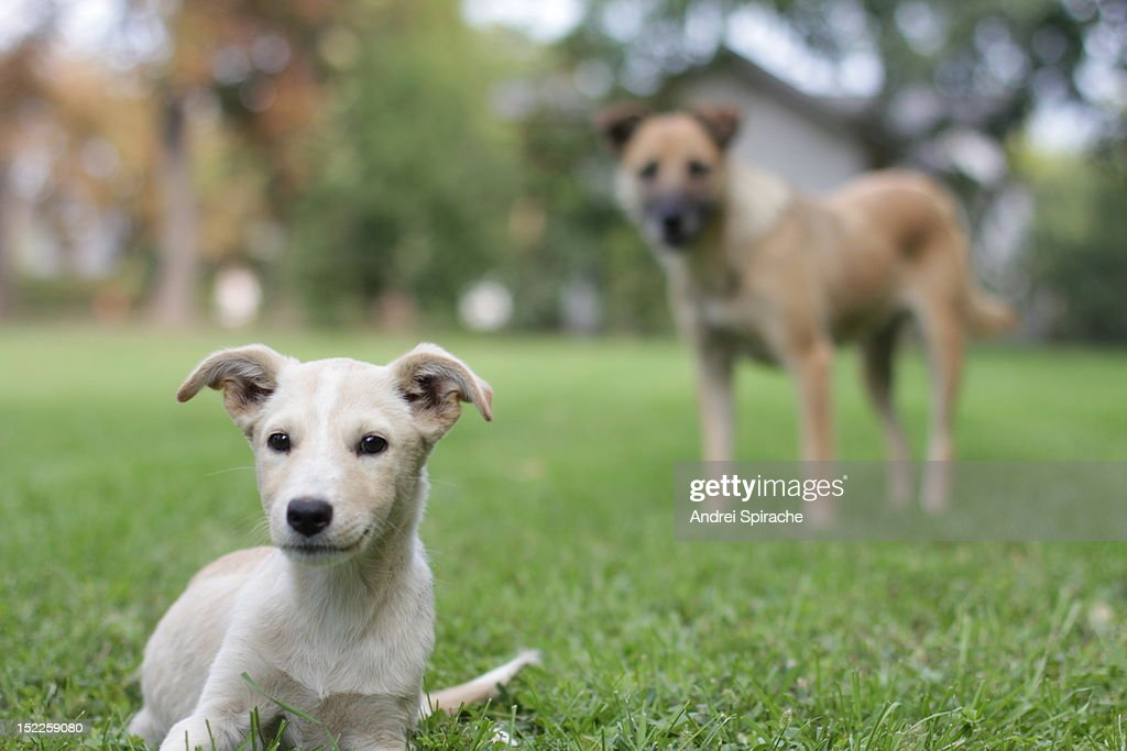 Puppy and mother outdoors : Stock Photo