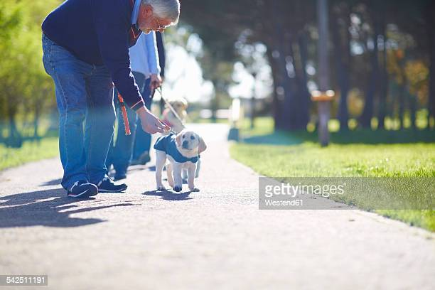 Puppy at dog training