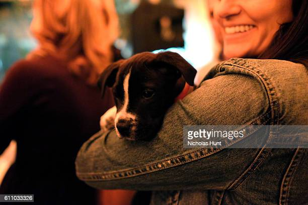 Puppy attends the celebration of the launch of Rachael Ray's Nutrish DISH with a Puppy Party on September 28, 2016 in New York City.