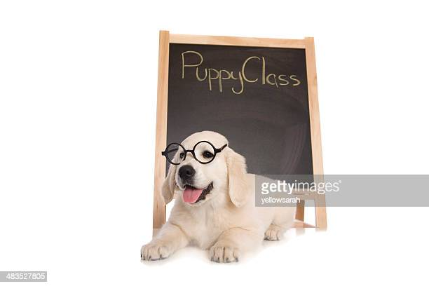 puppy class - obedience training stock pictures, royalty-free photos & images