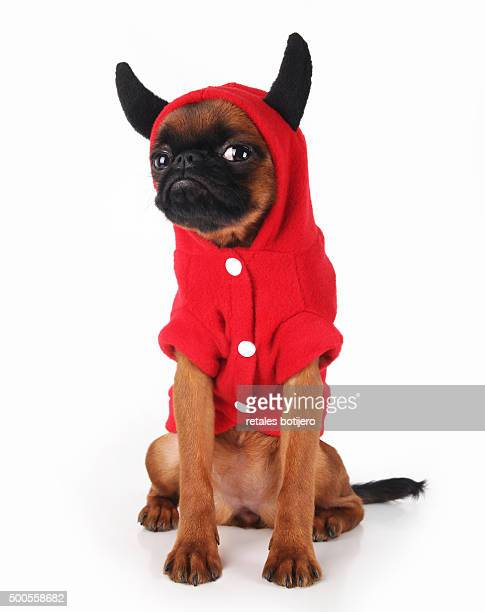 puppy devil halloween - devil costume stock photos and pictures