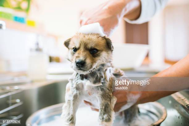 A puppy dog getting bathed in the kitchen sink